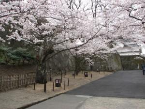 特定非営利活動法人 会津鶴ヶ城を守る会(会津若松市)